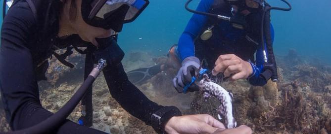 padi divemaster, work for a career, professional diver training, marine conservation, ghost net removal, downbelow marine and wildlife adventures, sabah, borneo, kota kinabalu, tunku abdul rahman marine park
