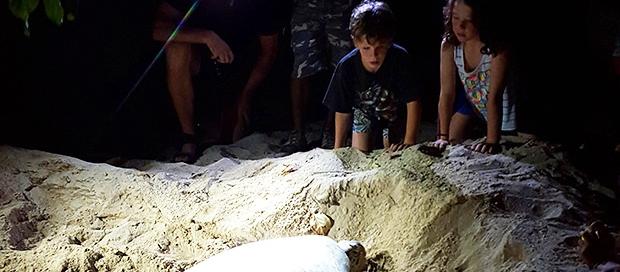 selingan turtle island, turtle hatchery, marine conservation, celebes sea, sabah travel centre, downbelow marine and wildlife adventures, wildlife safari, ecotourism, borneo,