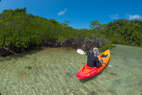 Sea Kayaking the Mangrove Lagoons