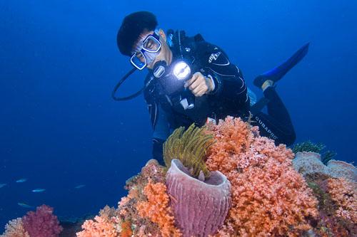 Scuba Diving