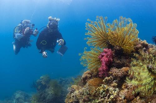 Coral Reef Diving
