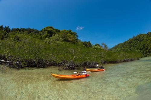 Sea Kayak to Mangrove Lagoons