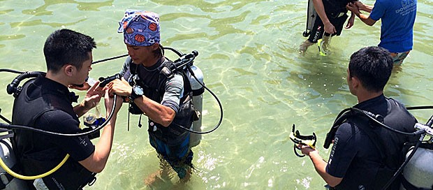 idcs instructor, idc staff, padi instructor trainer, padi discover scuba diving, work 4 a career, padi divemaster trainee, go pro team, premier padi 5 star idc dive centre, professional scuba diving training, downbelow marine and wildlife adventures, try dive