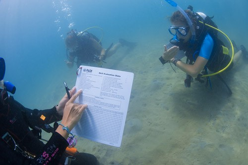 PADI Assistant Instructor