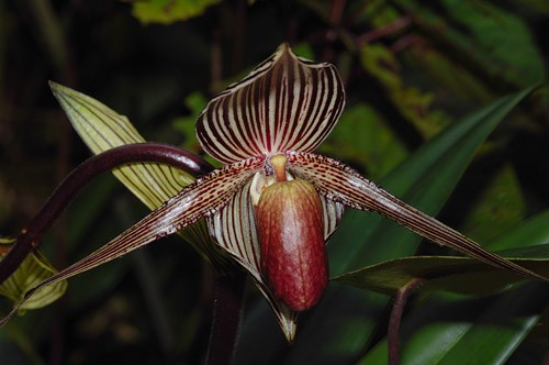 Nepenthes Trails