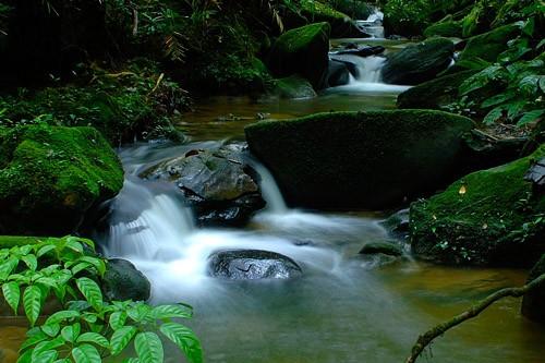 Rivers of Kinabalu Park
