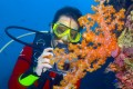 Stunning Coral Reefs at Sipadan