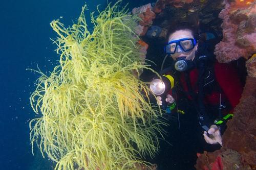 Soft Coral Reefs Lankayan Island