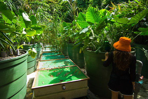 Hydroponics Treatment System Purifies Sewage and Wastewater for Recycling.