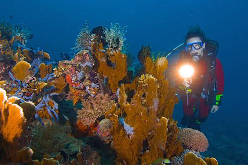 Wreck Diving At Lankayan