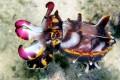 Flamboyant Cuttle Fish Kapalai Dive Sites