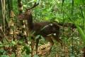 Wildlife Rasa Ria Resort