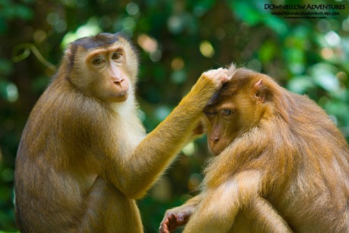 Proboscis Monkey Fireflies Tour