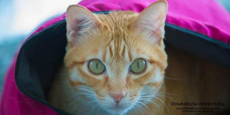 Downbelow Cattery at SPCA