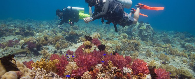 Learn to Scuba Dive in Borneo