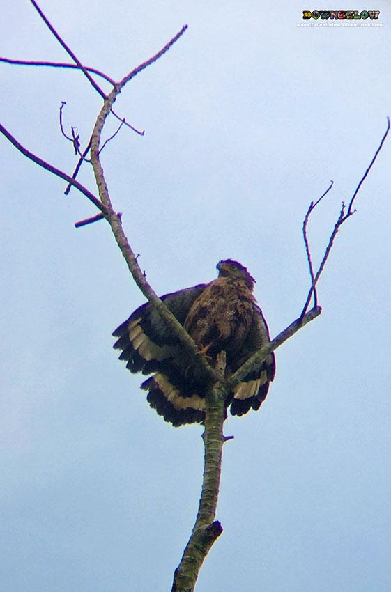 Exploring Tabin Wildlife Reserve