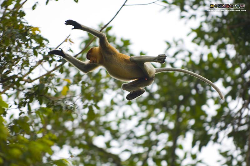 Safari Veterans Explore Borneo Wildlife