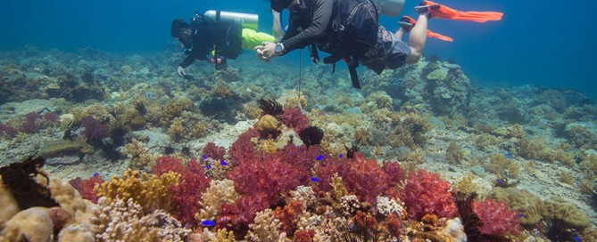 Stay and Dive or Snorkel Kota Kinabalu
