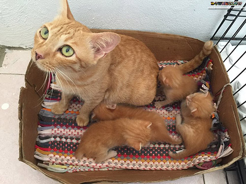 Animal Welfare Cat Shelter SPCA Kota Kinabalu
