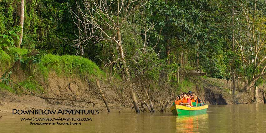Kinabatangan River Wildlife Safari