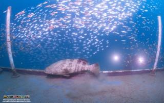 Wreck Dive Site Kota Kinabalu Sabah