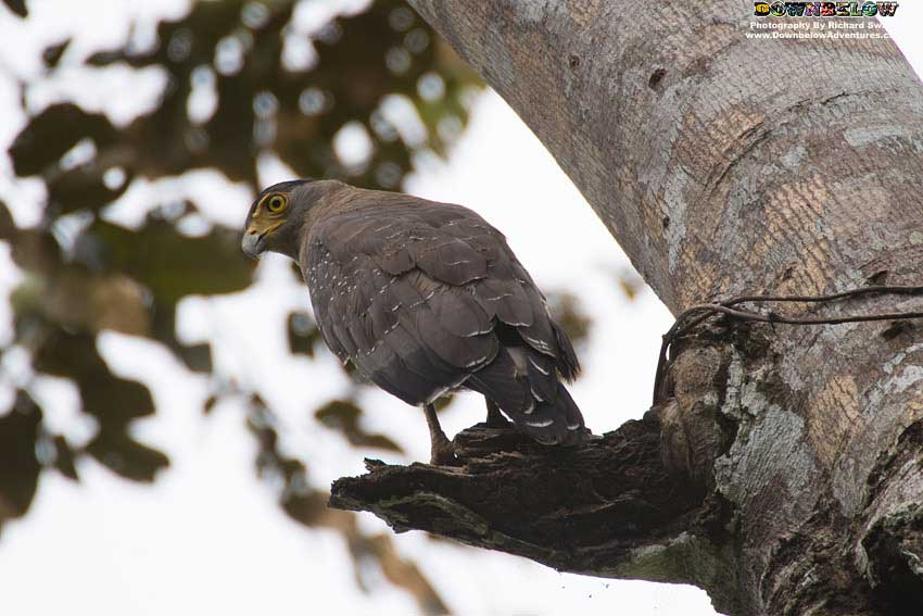 Tabin - Malaysia's Natural Bird Aviary