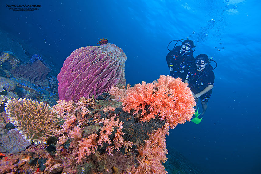 Best Stay and Scuba Dive in Kota Kinabalu