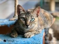 SPCA KK Cats