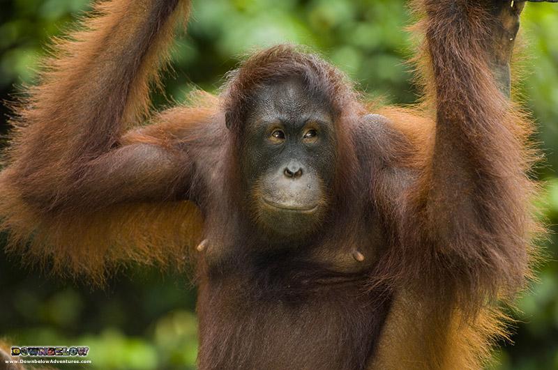 Borneo Big Five