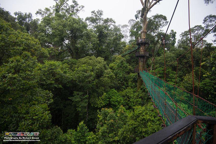 Danum Valley - Canopy Walkway