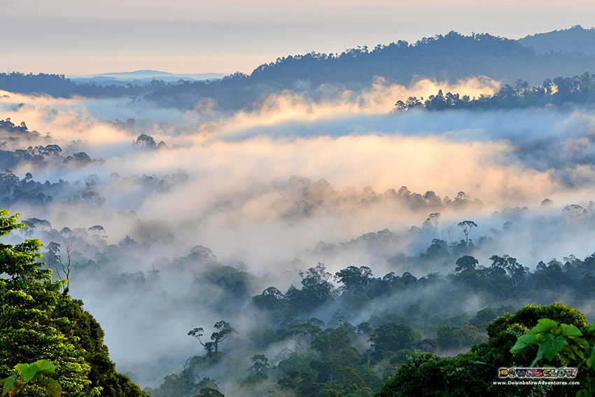 Danum Valley - Rainforest View