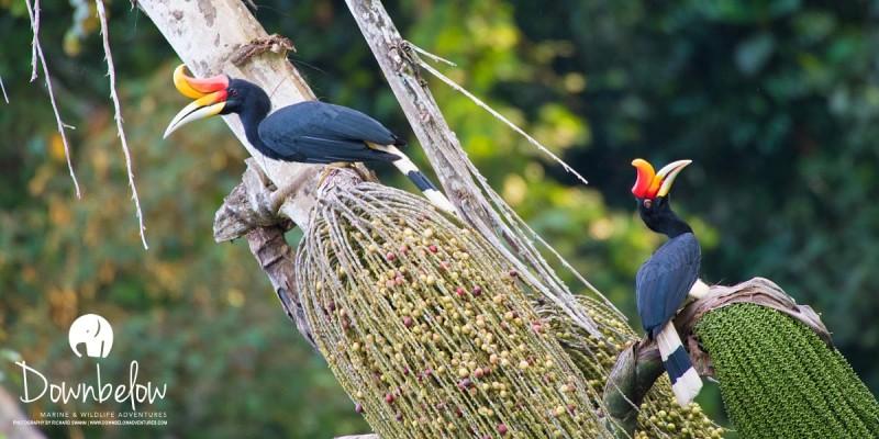 Borneo Birds