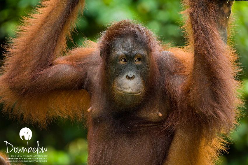 Group Photo Albums 2019 - Downbelow Adventures Borneo