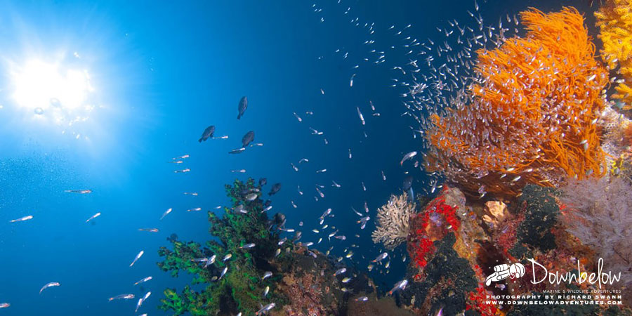 What Diving Is Like In Tunku Abdul Rahman Marine Park
